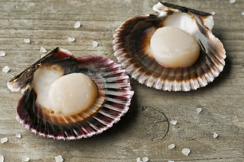 Frozen - Scallops in Half Shell